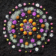 Flower Design Prints - Garden  Mandala 2009  Print by Joseph Duba