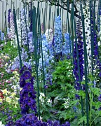 Blue Flowers Tapestries - Textiles Posters - Garden of Delphiniums Poster by Mimi Saint DAgneaux
