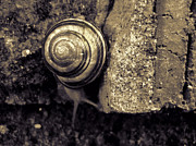 Jeff Breiman - Garden Snail