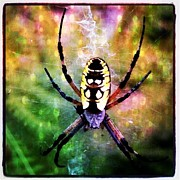 Christy Bruna Art - Garden Spider by Christy Bruna