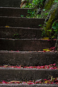 Green Leafs Posters - Garden Steps Poster by Mitch Shindelbower