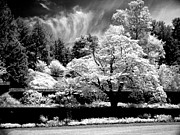 Infrared Framed Prints - Garden tree Framed Print by Paul W Faust -  Impressions of Light