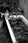 Shawna Gibson - Garden tub