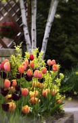 Garden Scene Metal Prints - Garden Tulips Metal Print by Julie Palencia