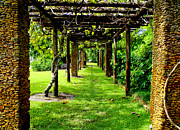 Scenic Drive Prints - Garden Walkway Print by Carey Chen