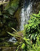 Margaret Saheed - Garden Waterfall 2