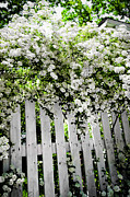 Board Fence Framed Prints - Garden with white fence Framed Print by Elena Elisseeva