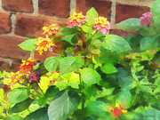 Florals Framed Prints - Gardens - Lantana Against Brick Wall Framed Print by Susan Savad