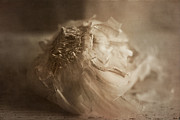 Crushed Framed Prints - Garlic 1 Framed Print by Elena Nosyreva