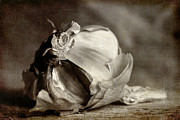 Europe Digital Art Metal Prints - Garlic 3 Metal Print by Elena Nosyreva