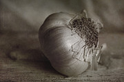 Crushed Framed Prints - Garlic 4 Framed Print by Elena Nosyreva