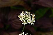 Byron Varvarigos - Garlic Can Also Be Glamorous