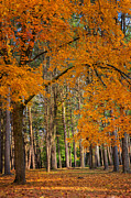 Fall Landscape Prints - Gateway to the forest Print by Bill  Wakeley