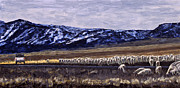 Fall Panorama Paintings - Gather Scipio by Kevin Marcoux by Kevin Marcoux