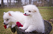 Little Dogs Photos - Gather ye rosebuds while ye may . . . by Bonnie Barry