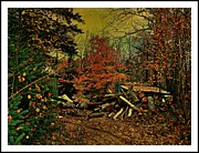 Woodpile Prints - Gathering Wood For Winter  Print by Dianne  Lacourciere