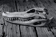Reptiles Photo Prints - Gator black and white Print by Garry Gay