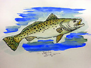 Trout Drawings - Gator Trout Attacks by David Danforth