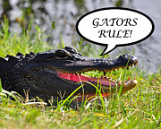 Gators Rule Greeting Card Print by Al Powell Photography USA