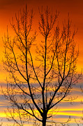Colorado Greeting Cards Posters - Gavins Sunset 2 Poster by James Bo Insogna