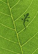 Gecko Print by Aged Pixel
