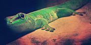 Gecko Posters - Gecko Poster by Angela Doelling AD DESIGN Photo and PhotoArt