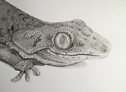 Reptiles Drawings - Gecko lizard by Jess Stanley