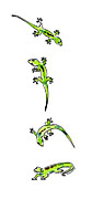 Lizards Paintings - Gecko Play 1 by Diane Thornton