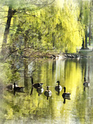 Weeping Willow Posters - Geese by Willow Poster by Susan Savad