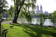 Geese Framed Prints - Geese in Central Park NYC Framed Print by Madeline Ellis