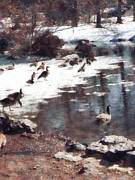 Ponds Prints - Geese on an Icy Pond Print by Susan Savad