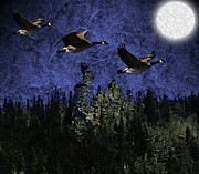 Geese Digital Art Posters - Geese Over Golden Gate Canyon Poster by Michael Hurwitz