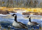 Canadian Geese Paintings - Geese Pair ACEO by Virginia Potter