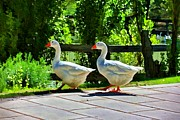Geese Digital Art Prints - Geese Strolling In The Garden Print by Tracie Kaska