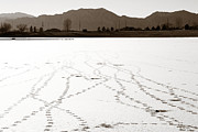 Marilyn Hunt - Geese Tracks in Winter