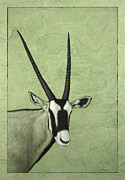 James W Johnson Drawings Prints - Gemsbok Print by James W Johnson