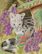 Jeanette K - Genet Cat