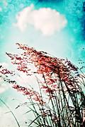 Scott Pellegrin - Gentle Breeze 2