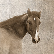 Western Art Digital Art - Gentle Devotion by Betty LaRue