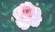 Bud Pastels Prints - Gentleness out of the Darkness Print by Terra Summers