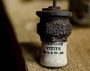 Electric Current Prints - Genuine Vitite Spark Plug Print by Wilma  Birdwell