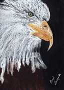 American Eagle Pastels Prints - Georges Eagle Print by Carol Lindquist