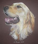Golden Retriever Art Pastels Prints - Georgie Print by Joanne Simpson