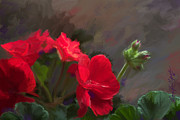 Bon  Fillpot - Geranium in Red