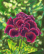 Color Pencil Drawings - Geranium Royalty by Lew Davis