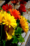 Gladiolas Digital Art Prints - Gerber Daisies Print by Jeff McJunkin