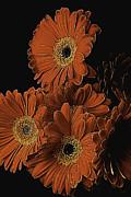 Garry Gay - Gerbera Daisy Abstract