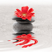 Mindful Prints - Gerbera reflection Print by Delphimages Photo Creations