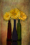 Digitally Enhanced Prints - Gerbera Trio Print by Susan Candelario