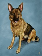 German Shephard Prints - German Shephard Print by Theo Ybema